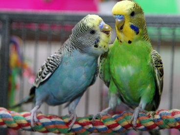 otter and weasel budgies