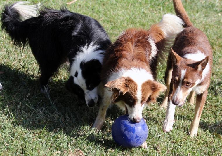dog trainer body language
