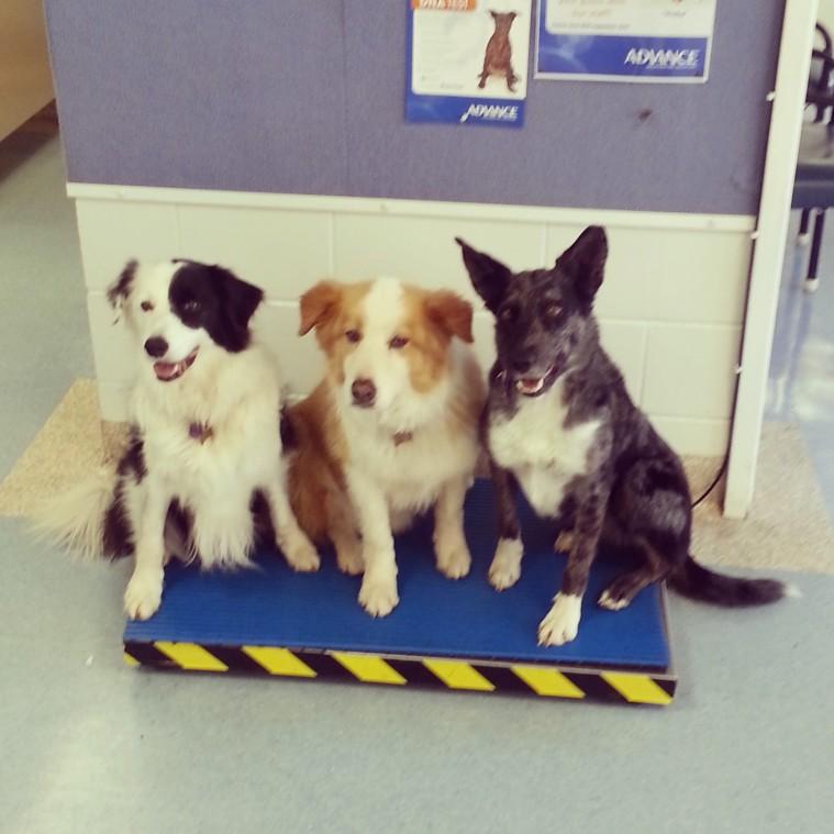 dog training townsville