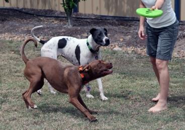 stubborn dogs