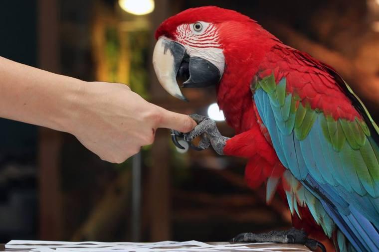 shake hands parrot