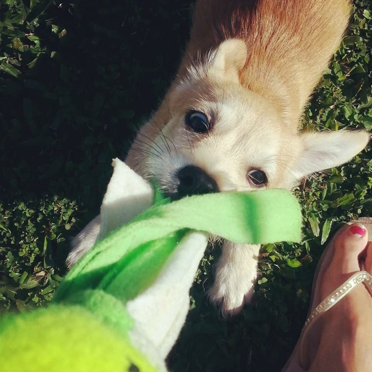 toy play reinforcer