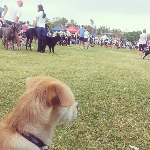 million paws walk townsville 2014