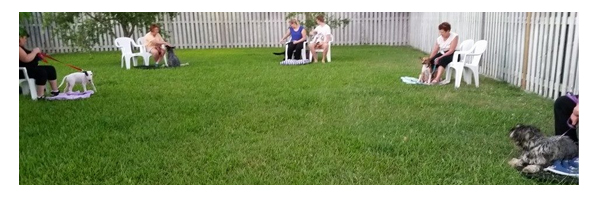 dog training townsville